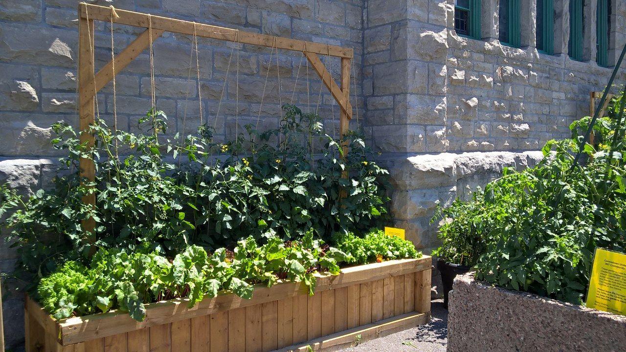Garden - A Thriving Garden 2